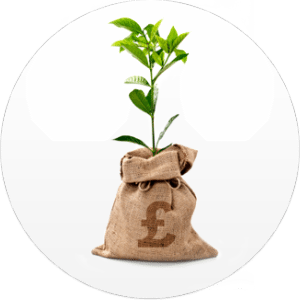 Money Tree from Funding Empire