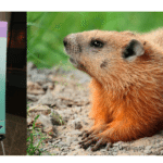 SEC Annual Forum on Small Business Capital Formation: Ground Hog Day for Small Biz?
