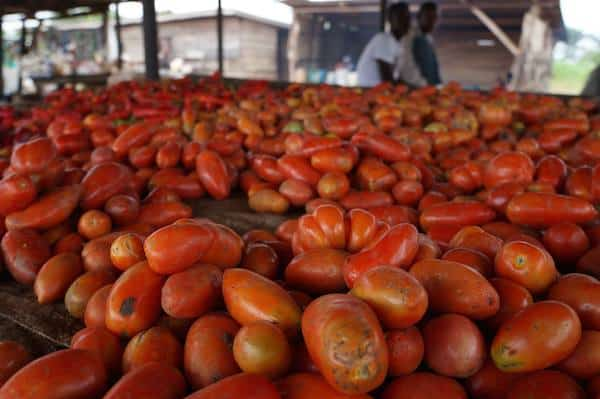 Two Harvard Grads Launch Kickstarter Campaign to Bring Their  Tomato Paste to Nigeria