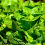 Walmart Orders Suppliers to Track Leafy Greens Using IBM Blockchain