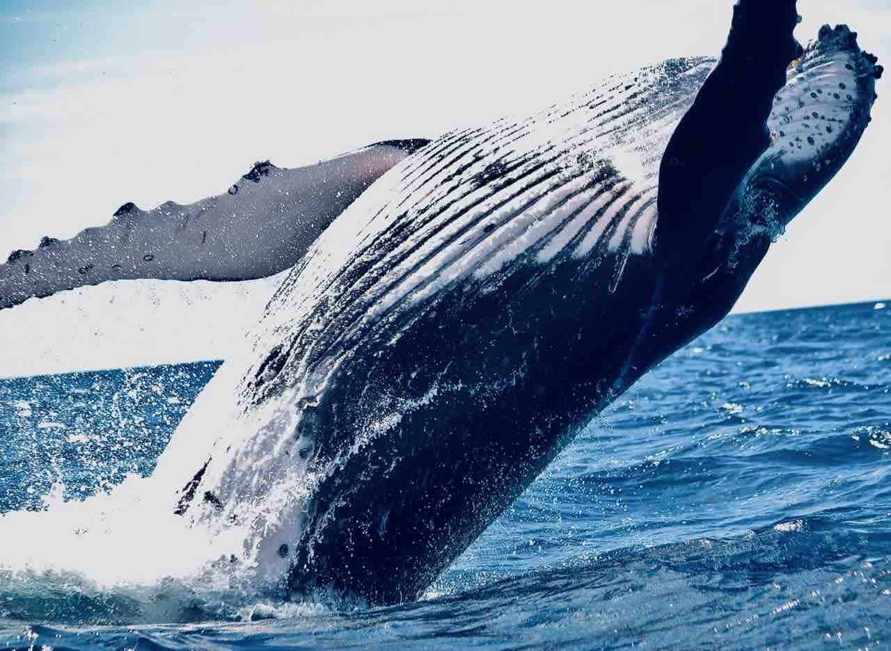 Modulus CEO Slams Cryptocurrency Exchange  OKEx Decision to Clawback Failed Whale $416 Million Bitcoin Position