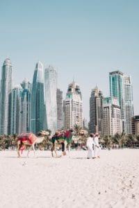 Dubai UAE Beach Camels fredrik-ohlander-unsplash