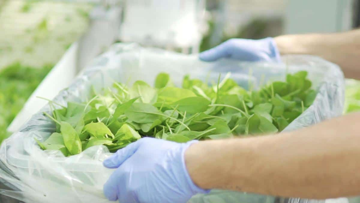 Pesticide-Free Hydroponic Farming Brand Element Farms Now Seeking Funding on WeFunder
