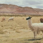 Monzo Co-Founder & Deput Chief Executive Paul Rippon Steps Down For Alpaca Business